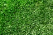 Textura de hierba verde ecológico. Patrón.
