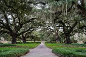 stock photo of old spanish trail  - Century old Live Oaks draped in Spanish moss - JPG