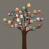 picture of owls  - Cute Owl on Tree  - JPG