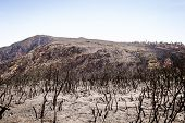 stock photo of ash-tree  - Charred remains of trees on a mountainside after a forest fire - JPG