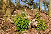 Reemerging Rhododendron.