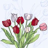 Background With Claret And White Tulips