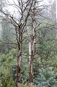 Deadwood, Alpine Region, Victoria Australia