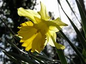 Backlit Golden Flower