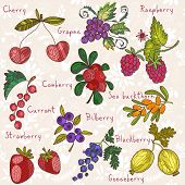 Bright  Berries Set In Vector. Raspberry, Bilberry, Cherry,cowberry,black Currant, Strawberry, Sea B