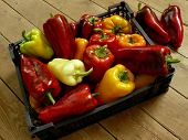 fresh harvested sweet peppers in plastic container