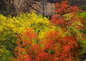 Fall Colors In Zion National Park
