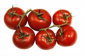 Delicious ripe Vine Tomatoes