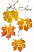 Autumn Leaf For Sale