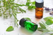 image of essential oil  - essential oils with herbs on science sheet - JPG