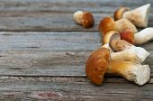 Edible Mushroom (cep) On The Plate  On Wood Background