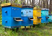 apiary in forest at summer time