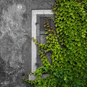 abandoned home overgrown with ivy