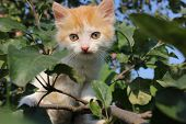 Kitten among leaves