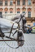 picture of carriage horse  - Horse Carriage waiting for tourists at the Old Square in Prague - JPG