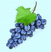 bunch of ripe dark grapes and green leaves closeup on aqua color  background