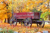 Antique cart in front of autumn trees