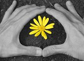 Yellow Flower with Hands