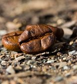 Closeup Of Coffee Beans. Coffee Bean On Ground Background.