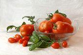 Datterini and Cirano tomatoes