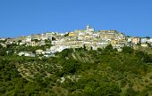 Oppido Lucano ancient town and olive trees