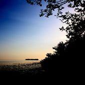 Florida Mangroves Sunset