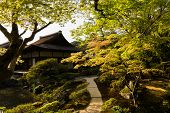 A wide variety of trees and greenery  in the Japanese garden of Ginkakuji Temple.