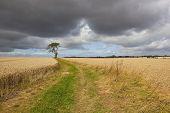 Stormy Farmland Landscape