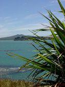 Vista del Golfo de Hauraki de NZs