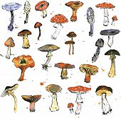 stock photo of morel mushroom  - Set of watercolor drawing mushrooms - JPG