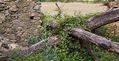 Ruined old stone house and wooden joists