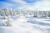 Winter Landscape With The Forest  And Traces Of A Hare On Snow