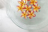 frangipani flowers in the glass bowl