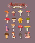 picture of edible mushroom  - Set of painted different mushrooms edible and inedible - JPG
