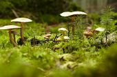 Mushroom On A Mossy Forest Floor