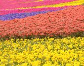 Flower Field In Park