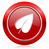nature icon leaf symbol