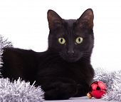 Beautiful black cat with a red bauble and silver tinsel, looking at the viewer