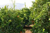 Inside an Orange Grove