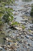 Garbage In Water  Sacred Hinduism Bagmati River.