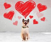 pic of siamese  - siamese cat meowing and looking up to some valentines hearts - JPG