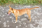 stock photo of stray dog  - Close up dirty stray dog standing on bumpy road - JPG