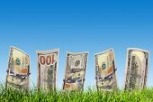 One hundred dollar banknotes growing from green grass. Concepts for business, investing, profit, money saving,