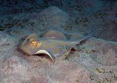 foto of mm  - Her ses en serie billeder fra dykning - JPG