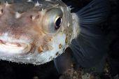 picture of mm  - Her ses en serie billeder fra dykning - JPG