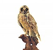 stock photo of taxidermy  - A mounted display of a taxidermy of an owl on a tree - JPG