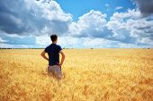 image of wheat-free  - Man in yellow wheat meadow - JPG