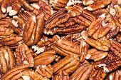 stock photo of pecan nut  - Pecan nut or Carya illinoinensis is a species of woody plants in the family Juglandaceae - JPG