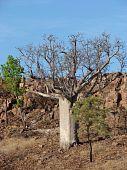 Upside-down tree