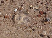 stock photo of jellyfish  - Small jellyfish on the hot wet sand - JPG